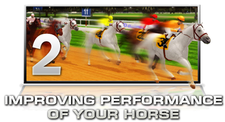 IMPROVING PERFORMANCE OF YOUR HORSE